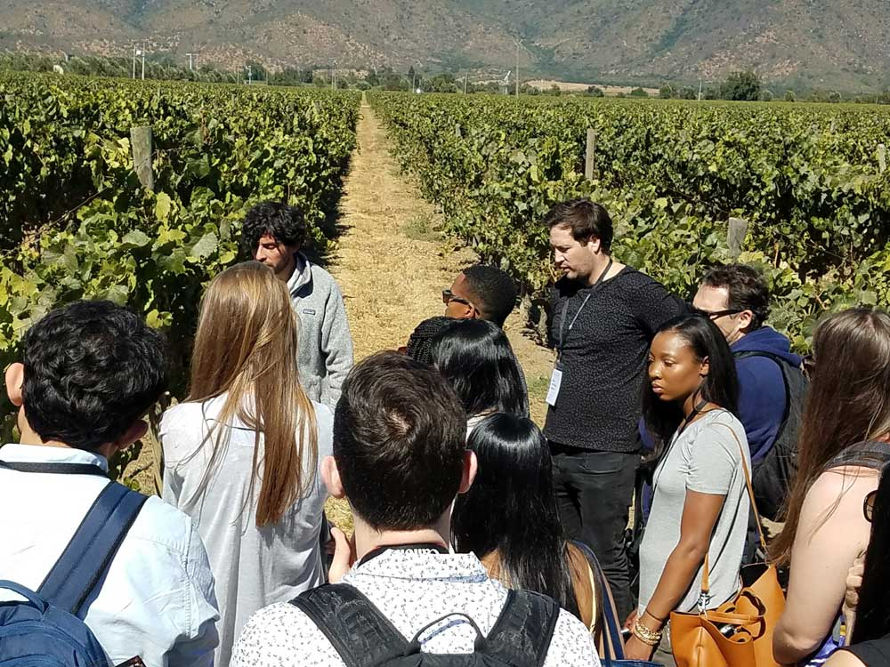 Students walk in a vineyard to learn about it for their innovation project